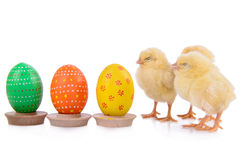 Easter eggs with newborn chickens Royalty Free Stock Image