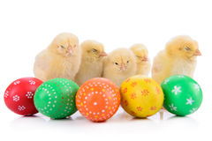 Easter eggs with newborn chickens Stock Images
