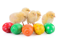 Easter eggs with newborn chickens Stock Photography