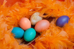 Easter eggs on orange feather Stock Image