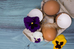 Easter eggs and pansies over blue wooden table. Copy space. Stock Images