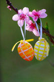 Easter Eggs And Pink Flowers Royalty Free Stock Image