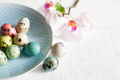 Easter eggs on plate and orchid abstract concept Stock Image