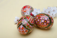 Easter eggs and plum cherry flowers Stock Photography