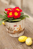 Easter eggs and primula flower Stock Images