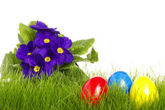 Easter eggs with a purple primula Stock Image