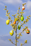 Easter eggs and pussy-willow. On branches Stock Photo