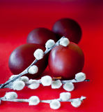 Easter eggs and pussy willow. Branches against red background Royalty Free Stock Images