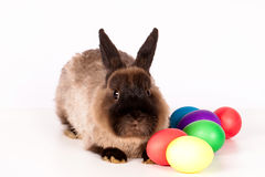 Easter eggs and rabbit Royalty Free Stock Image