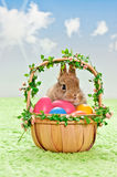 Easter eggs with rabbit Royalty Free Stock Images