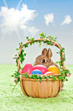 Easter eggs with rabbit Stock Photos