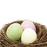 Easter eggs in real bird nest Royalty Free Stock Image