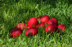 Easter eggs. Red Easter eggs on the grass Stock Image