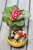 Easter eggs and red primula flowers on wooden table Royalty Free Stock Image