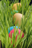 Easter eggs in a row on the grass Stock Image