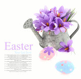 Easter eggs and saffron flowers Stock Images
