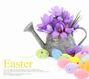 Easter eggs and saffron flowers Royalty Free Stock Image