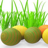 Easter Eggs Shows Green Grass And Grassland Stock Images