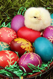 Easter eggs with a small chicken Royalty Free Stock Photos