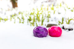 Easter eggs in snow Royalty Free Stock Image