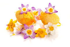 Easter eggs with  crocuses Stock Images