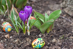 Easter eggs, spring flowers royalty free stock images