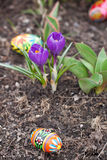 Easter eggs, spring flowers stock photography