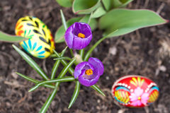 Easter eggs, spring flowers royalty free stock photo