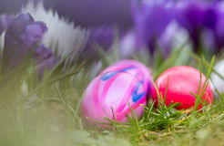Easter eggs and spring flowers background Royalty Free Stock Photo