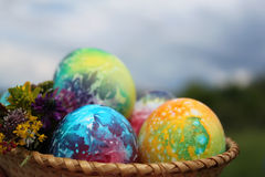Easter eggs and spring flowers bouquet Stock Image
