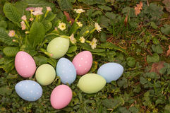 Easter eggs on spring flowers field. Blue, pink and green dotted colored easter eggs hidden at spring flowers field Stock Image