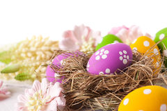 Easter Eggs with Spring Flowers Royalty Free Stock Photos
