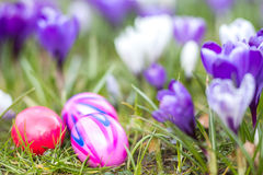 Easter eggs in spring Stock Photography