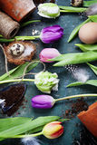 Easter eggs with spring tulip flowers Royalty Free Stock Photos