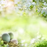 Easter eggs with spring blossoms. Easter eggs in spring with white cherry blossoms on bright green meadow royalty free stock images
