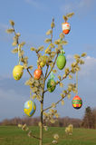 Easter eggs on spring willow tree Royalty Free Stock Photography