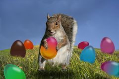Easter eggs and squirrel. Royalty Free Stock Photos