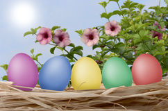 Easter eggs on straw Stock Photo