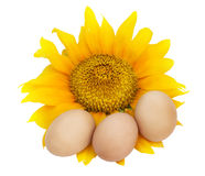 Easter eggs and sunflower Royalty Free Stock Photos