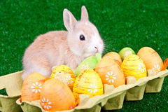 Easter eggs and sweet rabbit Royalty Free Stock Photography