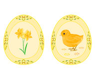 Easter eggs theme daffodil and baby chicken Stock Photos