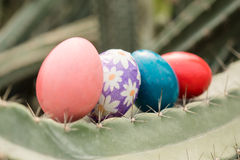 Easter eggs and thorn cactus. Four easter eggs on cactus Stock Photo