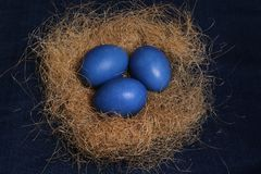 Easter eggs. Three blue eggs on the nest for Easter celebration Royalty Free Stock Images