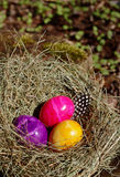 Easter eggs. Three colored eggs in the nest Stock Photo
