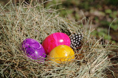 Easter eggs. Three colored eggs in the nest Stock Photos