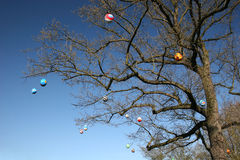 Easter eggs at a tree. Some colourfull easter eggs hanging at an old oak Royalty Free Stock Image