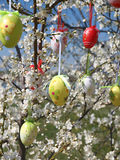 Easter eggs on tree Royalty Free Stock Image