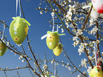 Easter eggs on tree Stock Images
