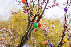 Easter eggs on Tree. Easter eggs haning on Tree Royalty Free Stock Photos