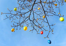 Easter eggs on a tree, view up to the sky Stock Photo